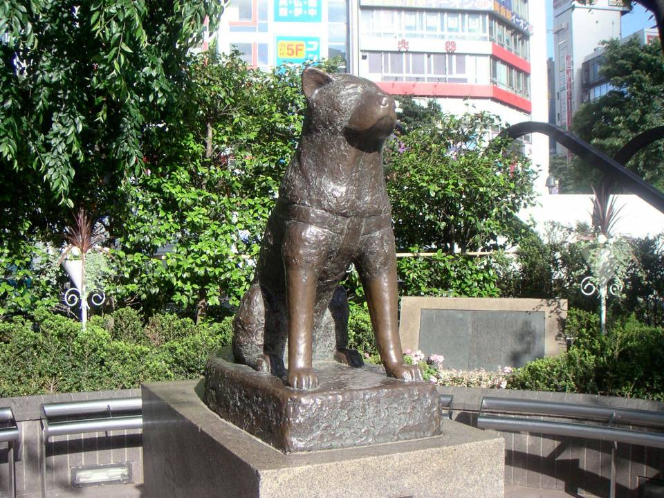 hachiko tokyo
