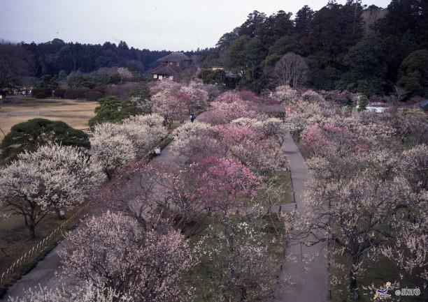 Kairaku-en Mito , Ibaraki Prefecture