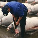 wisata jepang tsukiji fish